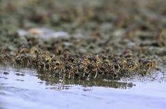 Animale/fauna selvatica fotografia stock libera da diritti