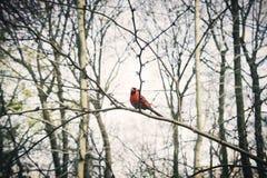 Animale Forest Beautiful Scene Nature Concept dell'uccello Immagine Stock