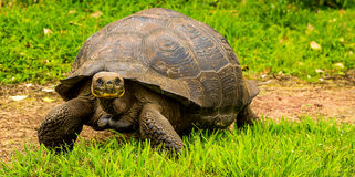 Animale in Galapagos Fotografia Stock