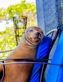 Animale in Galapagos Fotografie Stock Libere da Diritti