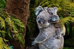 Animale indigeno australiano dell'orso di koala con il bambino immagini stock