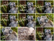 Animale indigeno australiano dell'orso di koala con il bambino ed i vari saluti immagine stock