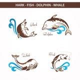 Animale marino della fauna selvatica Fotografia Stock Libera da Diritti