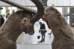 Animale naturale del museo di musa in Trento Immagini Stock