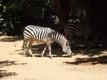 Animale nazionale dello zoo Fotografia Stock