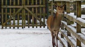 animale nello zoo Fotografie Stock Libere da Diritti