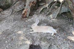 animale a Okunoshima, Hiroshima, Giappone immagini stock