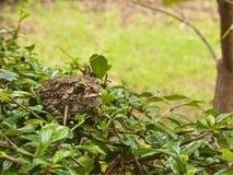 Animale, rospo che si siede sul campo di erba Fotografie Stock Libere da Diritti