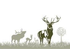 Animale selvatico, deers Fotografia Stock Libera da Diritti