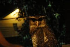 Animale selvatico sveglio fotografia stock libera da diritti