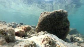 Animale subacqueo dell'Asia Tailandia di vita del pesce, acquatico, blu, pesce, oceano, scogliera, mare, tropicale, acqua video d archivio