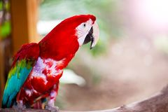 Animale tropicale dell'uccello selvaggio del pappagallo Fotografia Stock Libera da Diritti