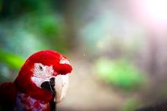 Animale tropicale dell'uccello selvaggio del pappagallo Fotografie Stock