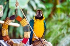 Animale tropicale dell'uccello selvaggio del pappagallo Immagini Stock
