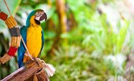 Animale tropicale dell'uccello selvaggio del pappagallo Immagine Stock