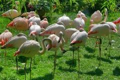 Animales 0 Foto de archivo libre de regalías