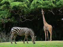 Animales fotografía de archivo