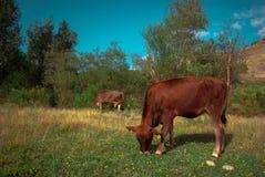 Animales 5 Imágenes de archivo libres de regalías