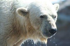Animales fotos de archivo libres de regalías