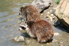 Animales Fotos de archivo