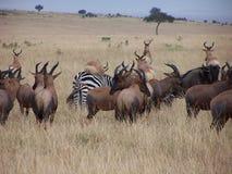 Animales africanos Fotos de archivo
