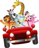 Animales africanos en coche rojo Imagenes de archivo