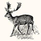 Animales antiguos ilustración del vector