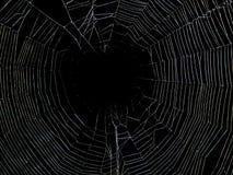Animales - araña y Web Imagen de archivo libre de regalías