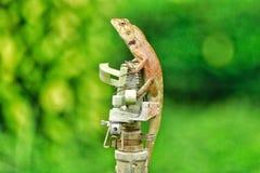 Animales asombrosos Imagen de archivo