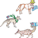 Animales australianos - dingo, thylacine, numbat Fotografía de archivo libre de regalías