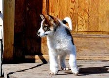 Animales caseros Fotografía de archivo libre de regalías