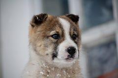 Animales caseros Foto de archivo libre de regalías
