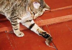 Animales caseros Imagen de archivo libre de regalías