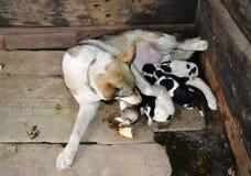 Animales caseros Fotografía de archivo