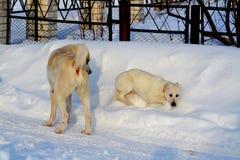Animales caseros Imágenes de archivo libres de regalías