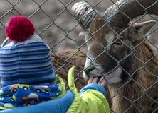 Animales de alimentación del niño en parque zoológico Imagenes de archivo