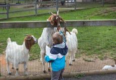 Animales de alimentación del pequeño niño pequeño en parque zoológico Imagen de archivo libre de regalías