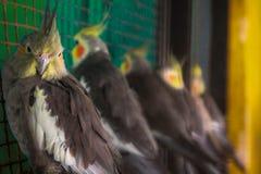 Animales de animal doméstico Fotos de archivo libres de regalías