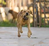 animales de animal doméstico, perros Fotografía de archivo