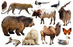 Animales de Asia aislados Fotografía de archivo libre de regalías