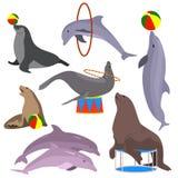Animales de circo marinos fijados Ilustración del vector plano stock de ilustración