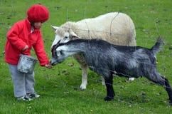Animales de la alimentación de la niña foto de archivo libre de regalías