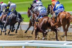 Animales de la carrera de caballos que golpean la acción posterior de la pista imagen de archivo libre de regalías