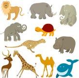 Animales de la fauna Fotografía de archivo