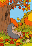 Animales de la historieta para los niños Pequeño erizo lindo Imagenes de archivo