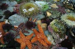Animales de la piscina de la marea Imagen de archivo libre de regalías