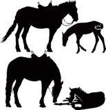 Animales de los caballos Fotografía de archivo libre de regalías
