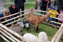 Animales de los niños y del campo Fotografía de archivo