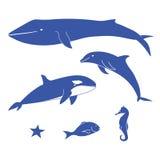 Animales de mar Foto de archivo libre de regalías