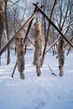 Animales de piel en un árbol Fotos de archivo